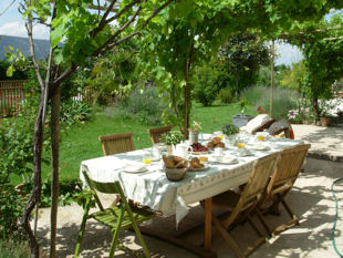 Breakfast buffet on the terrace under the vines.
