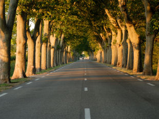 Old Roman road lined with Plane trees.
